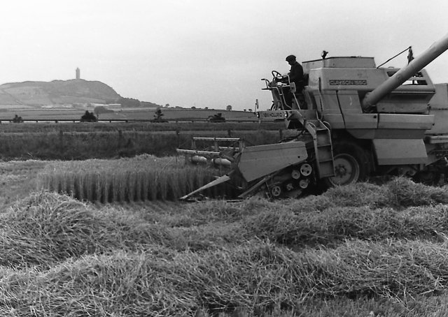 Harvester in operation with Scrabo Hill in the distance in September 1980. Picture: Farming Life archives