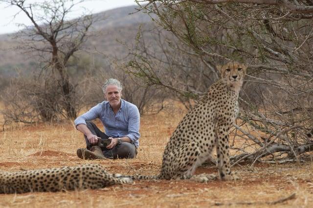 Gordon Buchanan with wild cheetah Savannah and her cubs in Tswalu Kalahari Reserve, South Africa