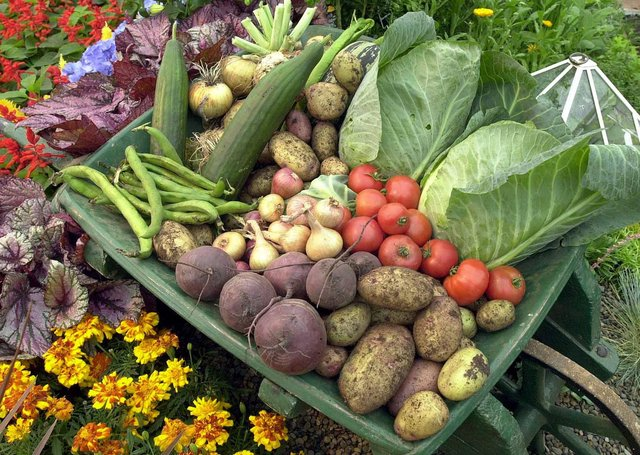 Gardeners are finding it increasingly difficult to get something as basic as vegetable seed as more and more GB companies pull out of the NI market