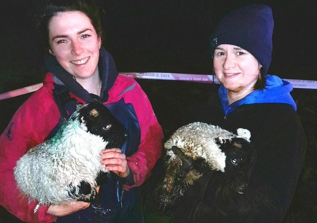 Some of the rescued lambs