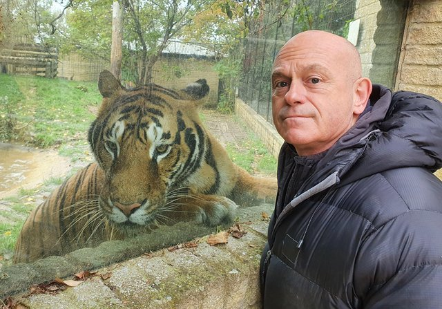 Ross Kemp with one of a collection of 5 rare Bengal Tigers at Heythrop Zoological Garden in Oxfordshire