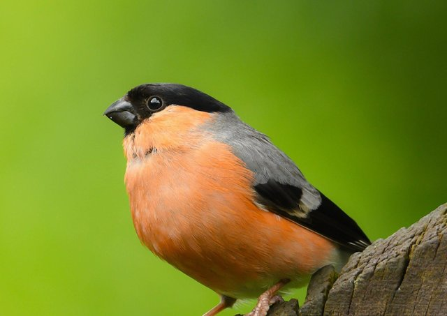 RSPB NI is appealing to people to be extra careful when tending to gardens from now on – and not to touch any birds' nests in or on houses