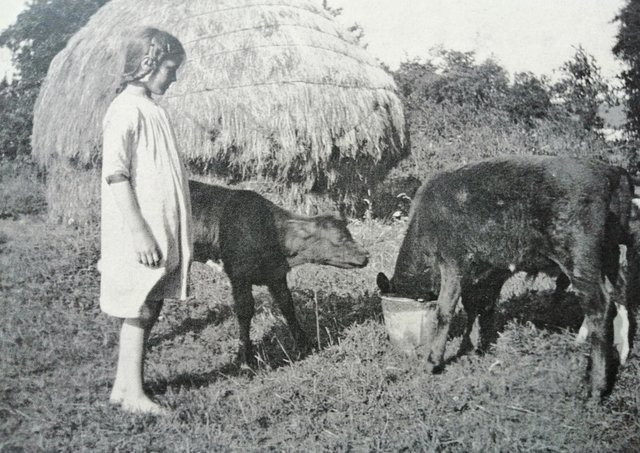 A lovely old photograph of Moira McAfee, aged 9, from Aghadowey, Co Londonderry, feeding calves in the Stack Garden in Drumale. Picture taken on July 13th 1926. Picture sent in by Farming Life reader Marcella McAuley