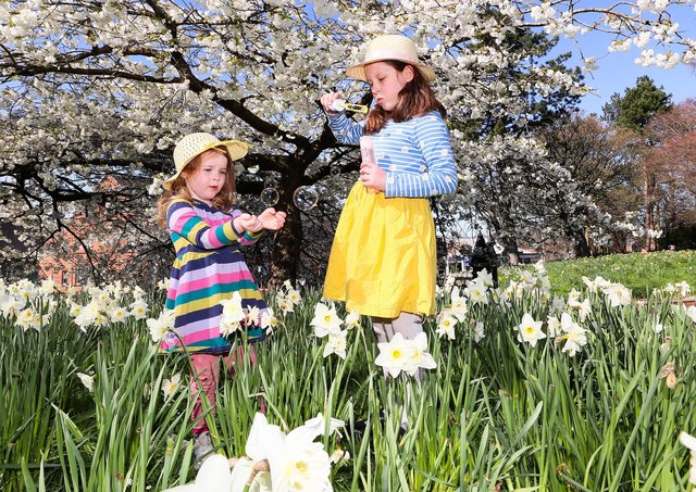 Three-year-old Nora McNally and Charlotte Gracey enjoy the daffodils and good weather in Ormeau Park in south Belfast. The pleasant temperatures and sunshine are to be replaced by winter like conditions on Monday. Picture by Jonathan Porter/PressEye