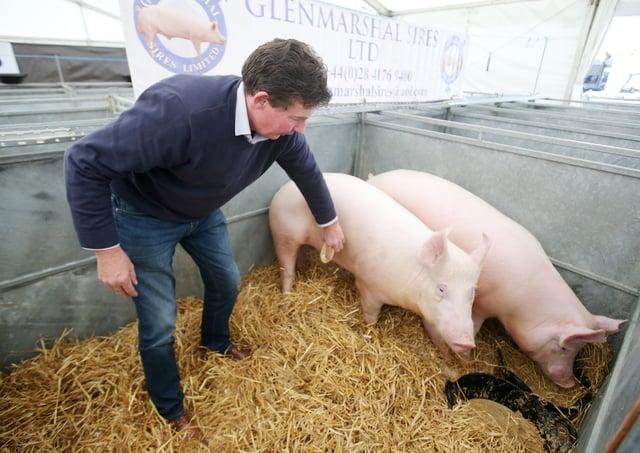Kilkeel pig farmer Trevor Shields says farmers are desperate due to the pressures. Photo: Jonathan Porter/PressEye.com