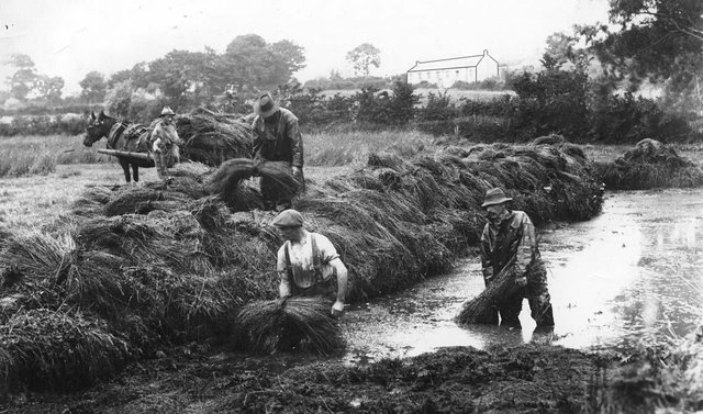 Flax dam at Cloney Farm, Knocknacarry, Co Antrim, circa 1914. Picture: Welch Collection, Ulster Museum