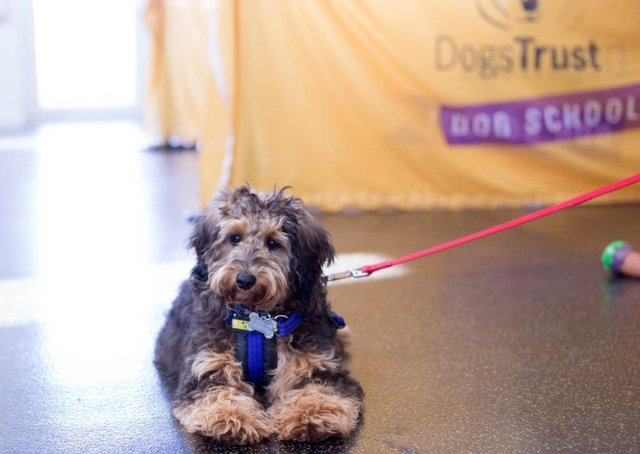 With lockdown restrictions continuing to ease, Dogs Trust is urging dog owners to prepare now