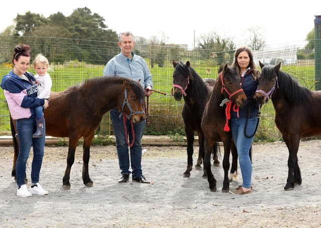 Agriculture Minister Edwin Poots pictured with the four Dartmoor Ponies bought by Co Down woman Ashleigh Massey for her daughter's birthday at their farm in Ballygowan. Included are Lisa Booth and Ashleigh with her daughter Alia.Photo by Kelvin Boyes / Press Eye.