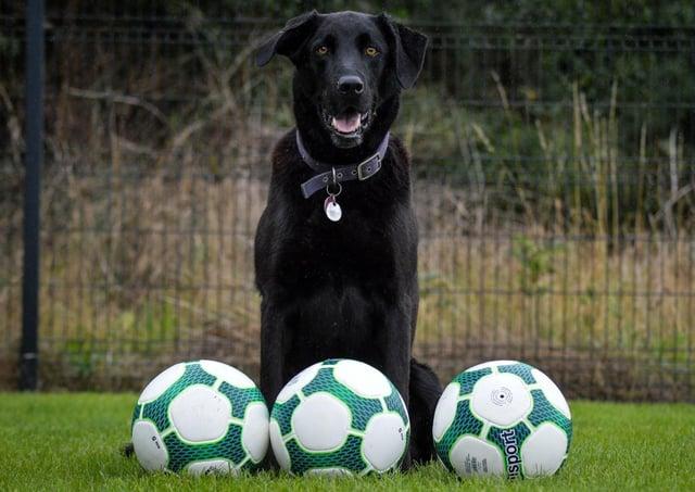 Beau the ball retrieval dog. Photo by Bill Guiller