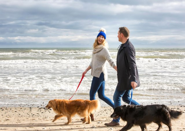 A summer staycation with your dogs