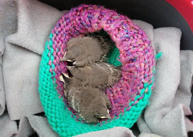 The three little birds found in Ballymena
