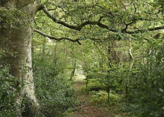 The woodland within Mourne Park had been in the same family for more than 500 years