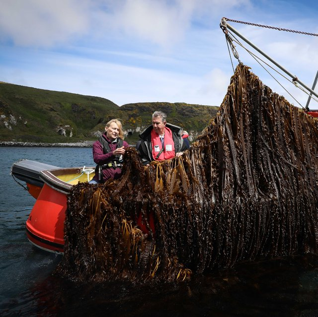 DAERA minister Edwin Poots meets with Kate Burns on Northern Ireland's first and only commercial seaweed farm. Photo by Kelvin Boyes / Press Eye